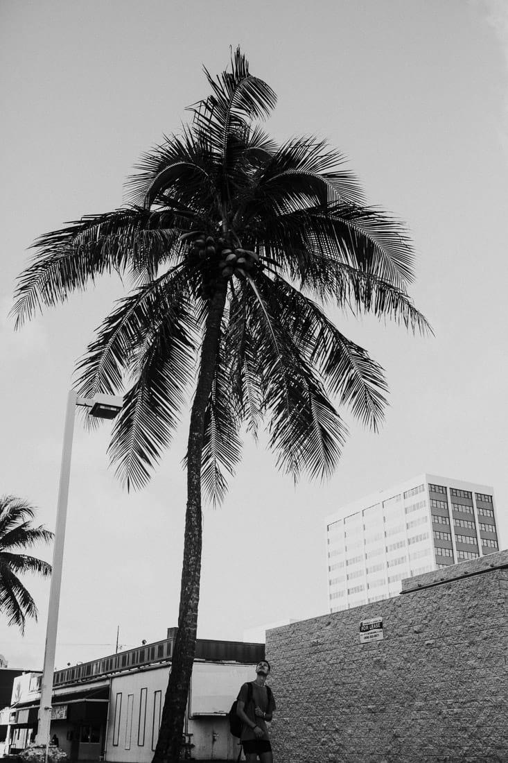 Waikiki Beach , Hawaii, Oahu, Honolulu